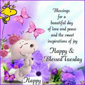 have a lovely tuesday