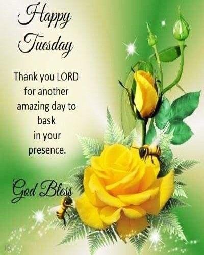 wish you a wonderful tuesday